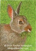 Unique Painting by animal artist Rachel - Nibbling Brown Rabbit